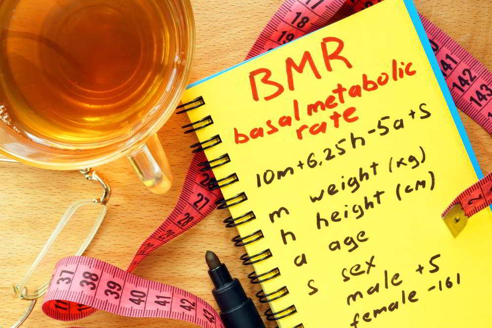 2. Basal Metabolic Rate